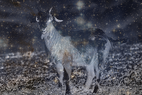 interstellar goat
